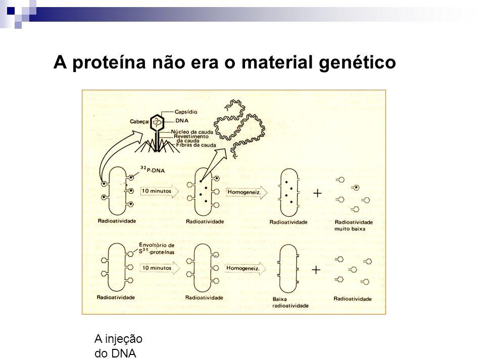 A proteína não era o material genético