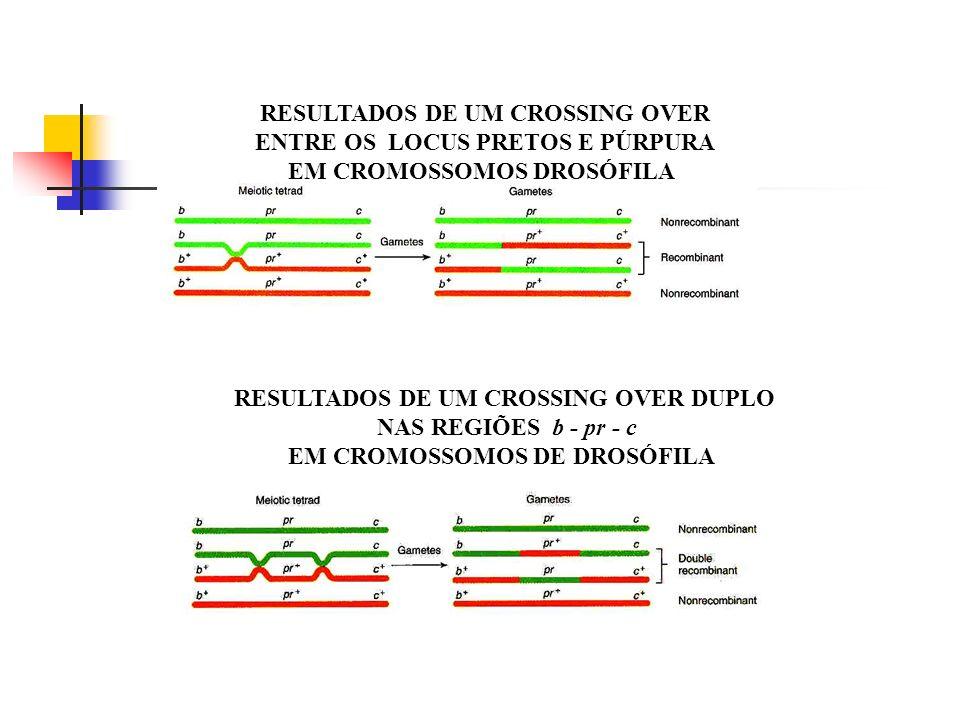 RESULTADOS DE UM CROSSING OVER ENTRE OS LOCUS PRETOS E PÚRPURA