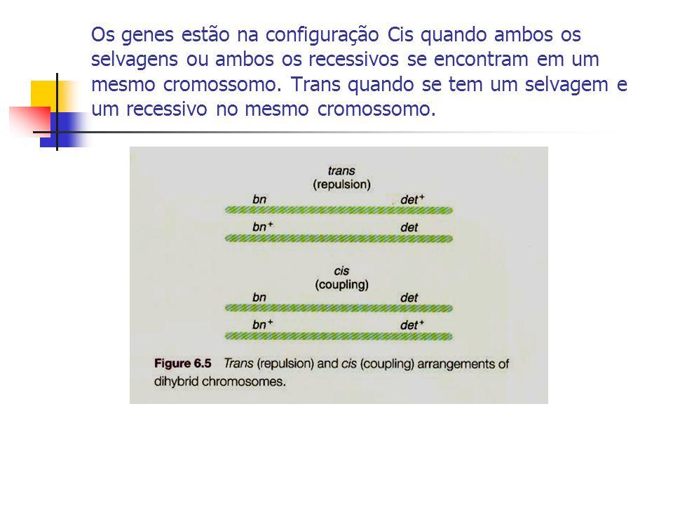 Os genes estão na configuração Cis quando ambos os selvagens ou ambos os recessivos se encontram em um mesmo cromossomo.