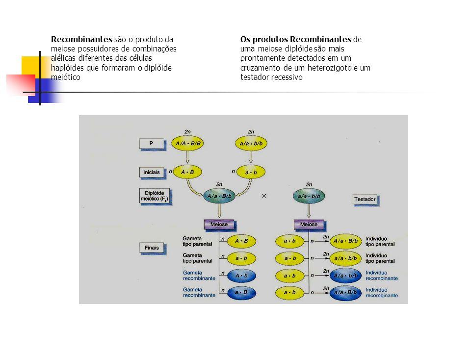Recombinantes são o produto da meiose possuidores de combinações alélicas diferentes das células haplóides que formaram o diplóide meiótico