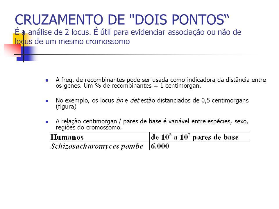 CRUZAMENTO DE DOIS PONTOS É a análise de 2 locus