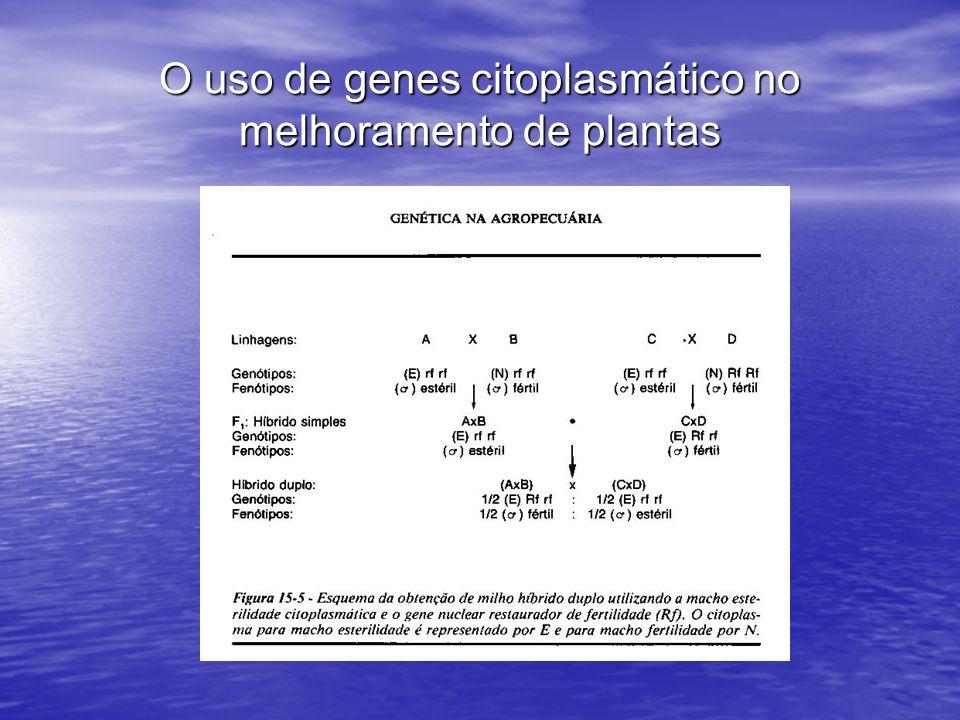 O uso de genes citoplasmático no melhoramento de plantas