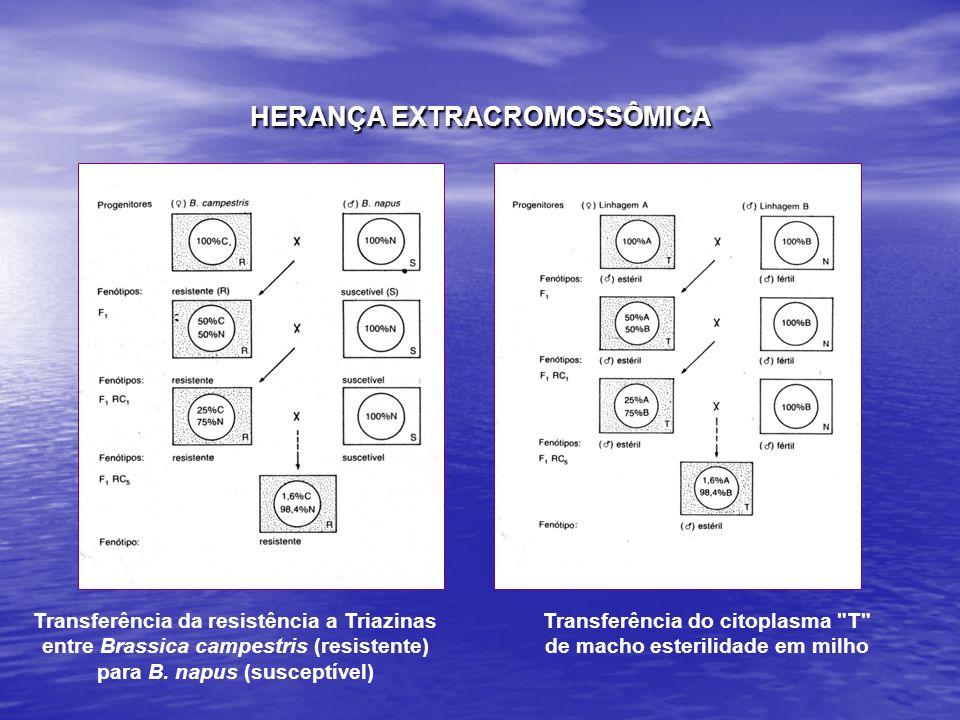 HERANÇA EXTRACROMOSSÔMICA