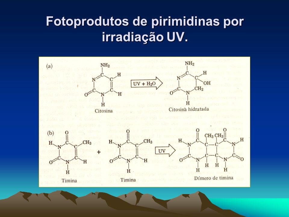 Fotoprodutos de pirimidinas por irradiação UV.