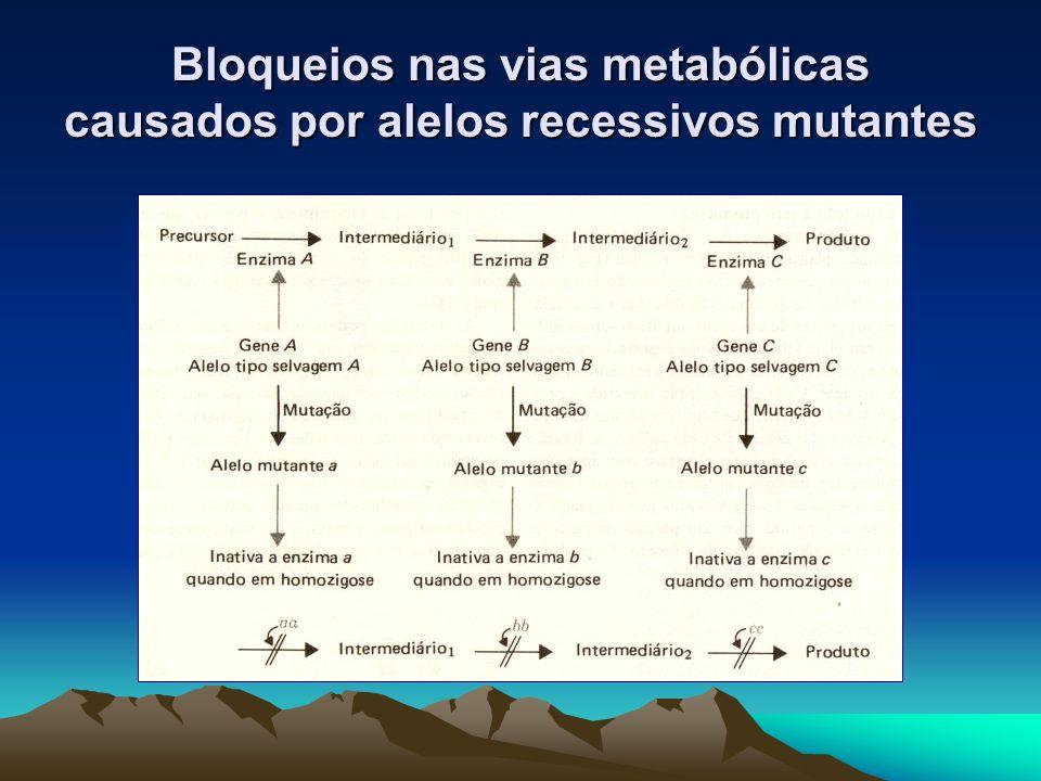 Bloqueios nas vias metabólicas causados por alelos recessivos mutantes
