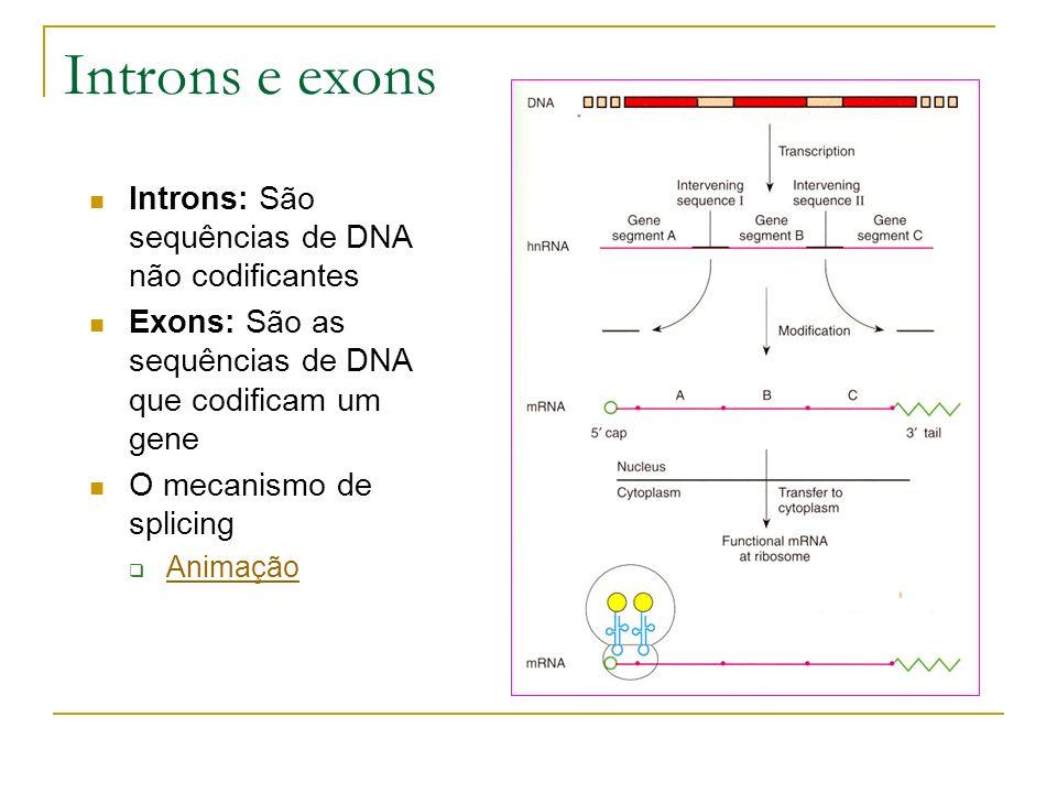 Introns e exons Introns: São sequências de DNA não codificantes