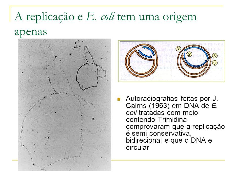 A replicação e E. coli tem uma origem apenas