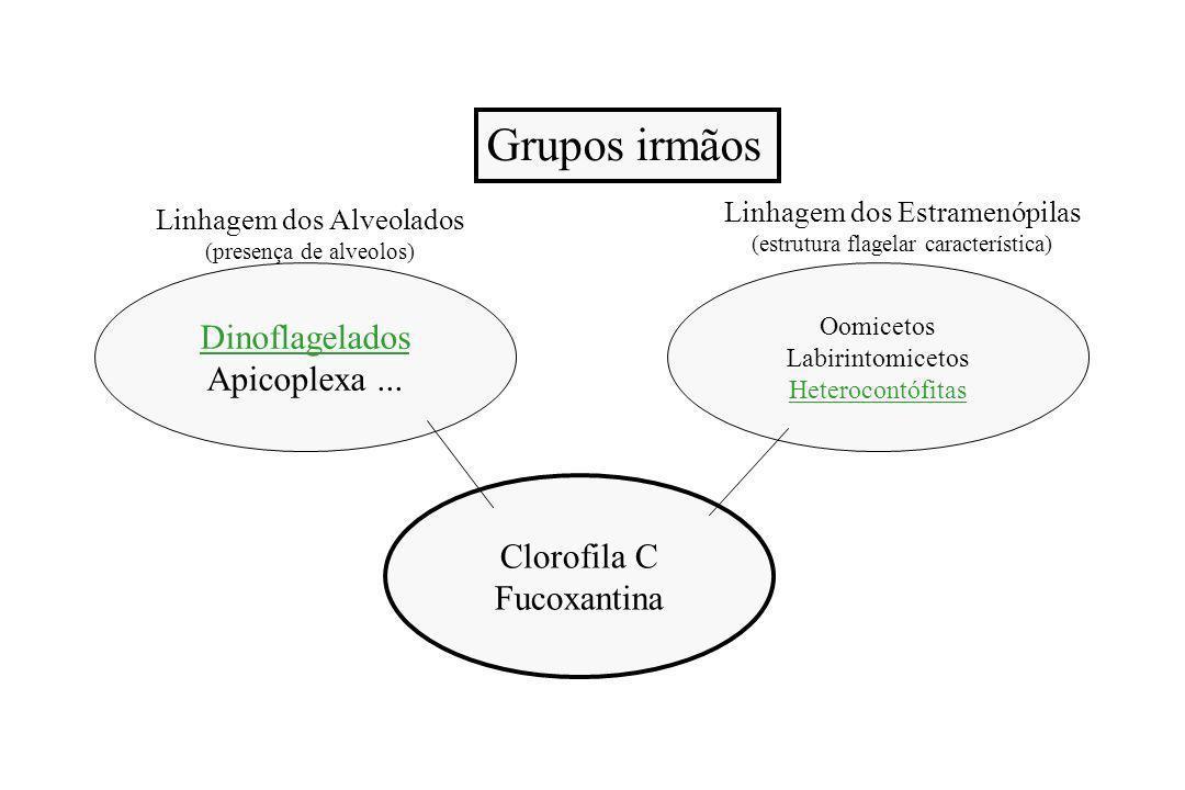 Grupos irmãos Dinoflagelados Apicoplexa ... Clorofila C Fucoxantina