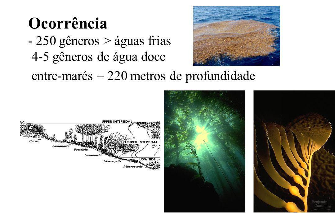 Ocorrência - 250 gêneros > águas frias 4-5 gêneros de água doce entre-marés – 220 metros de profundidade