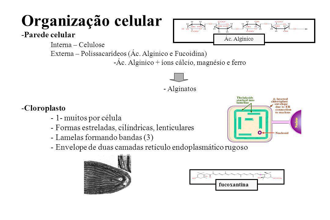 Ác. Alginico + íons cálcio, magnésio e ferro