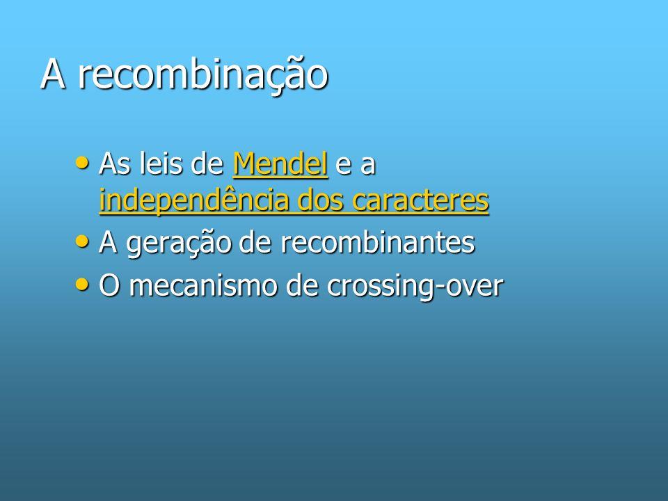 A recombinação As leis de Mendel e a independência dos caracteres