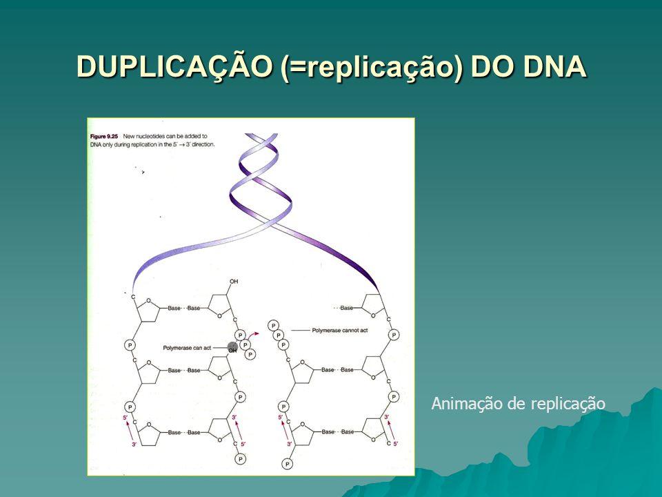 DUPLICAÇÃO (=replicação) DO DNA