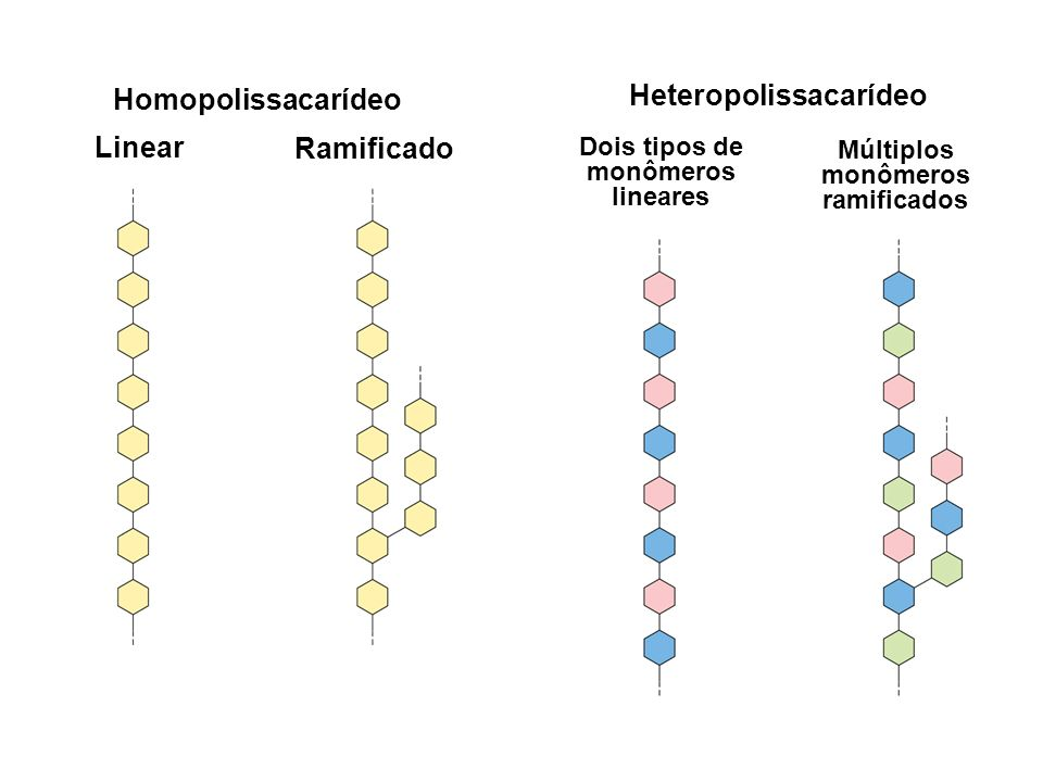 Homopolissacarídeo Heteropolissacarídeo Linear Ramificado
