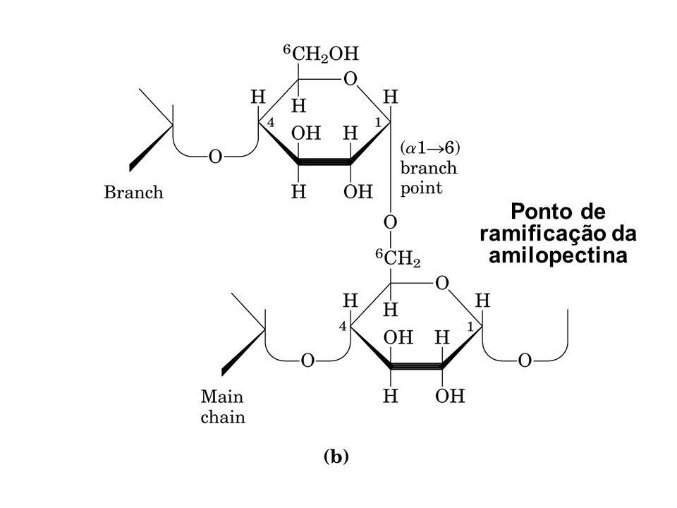 Ponto de ramificação da amilopectina