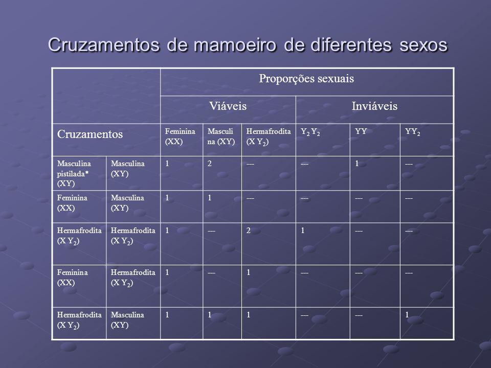 Cruzamentos de mamoeiro de diferentes sexos
