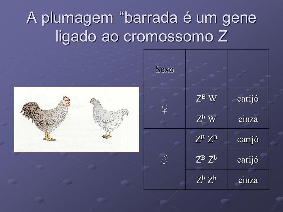 A plumagem barrada é um gene ligado ao cromossomo Z
