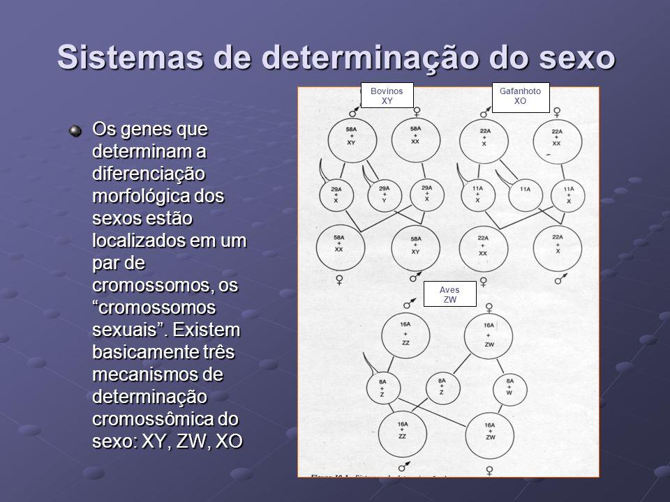 Sistemas de determinação do sexo