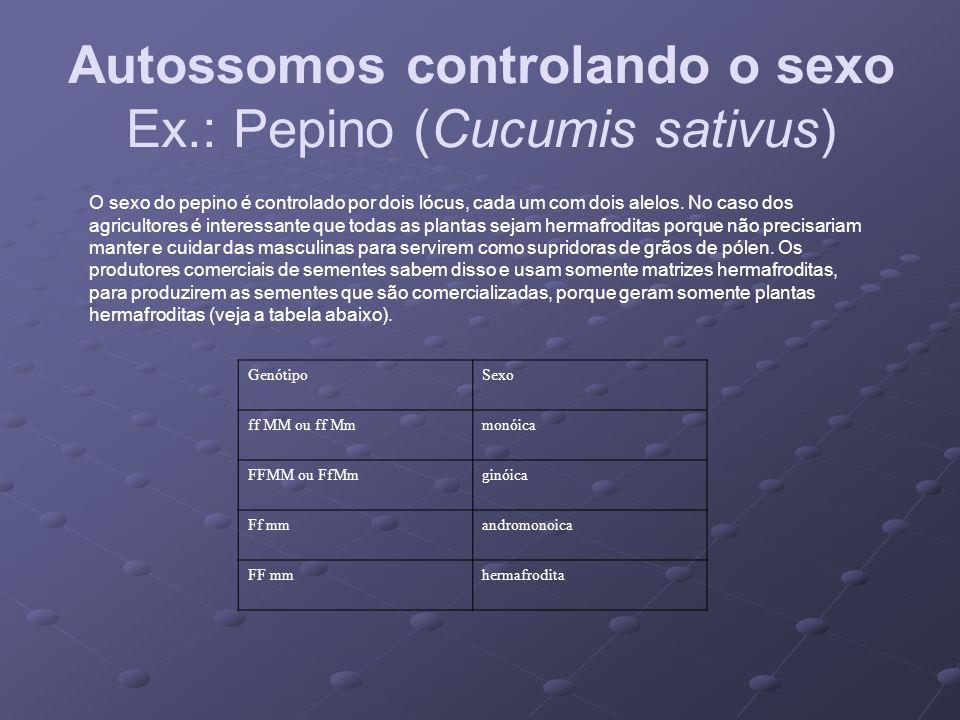 Autossomos controlando o sexo Ex.: Pepino (Cucumis sativus)