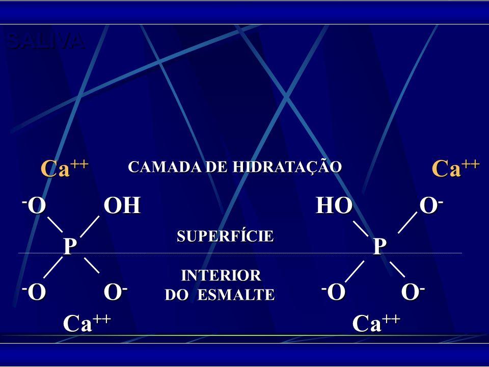 Ca++ Ca++ -O OH HO O- P P -O O- -O O- Ca++ Ca++ SALIVA