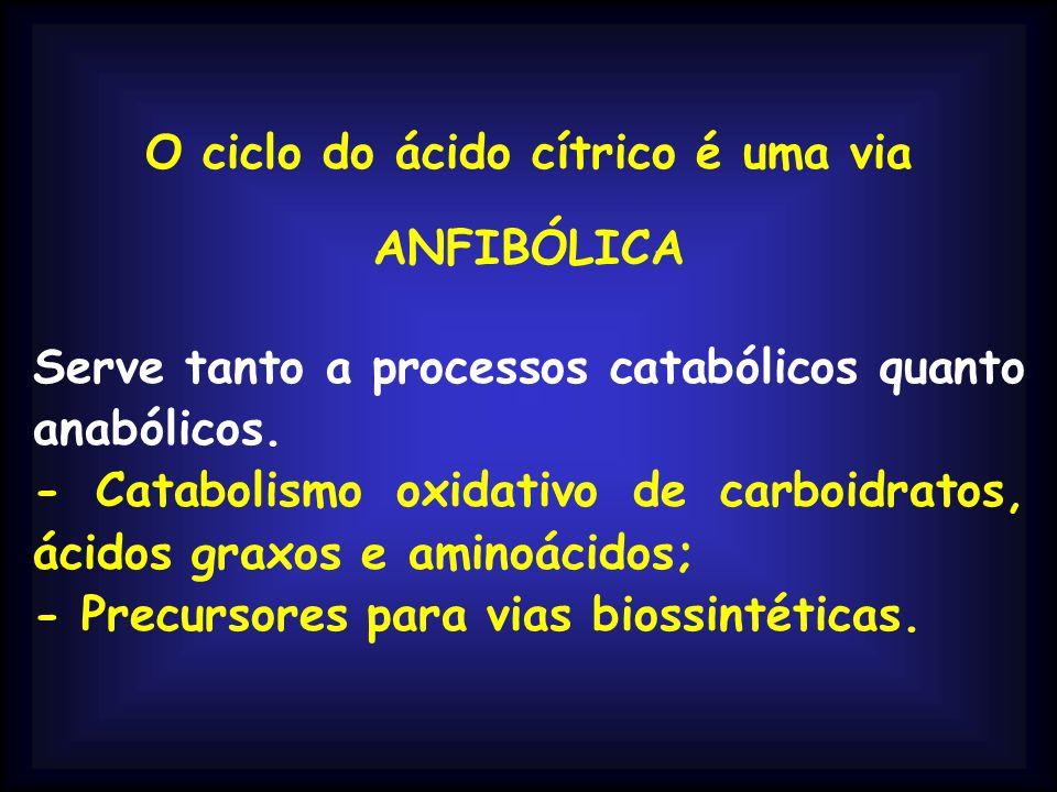 O ciclo do ácido cítrico é uma via ANFIBÓLICA