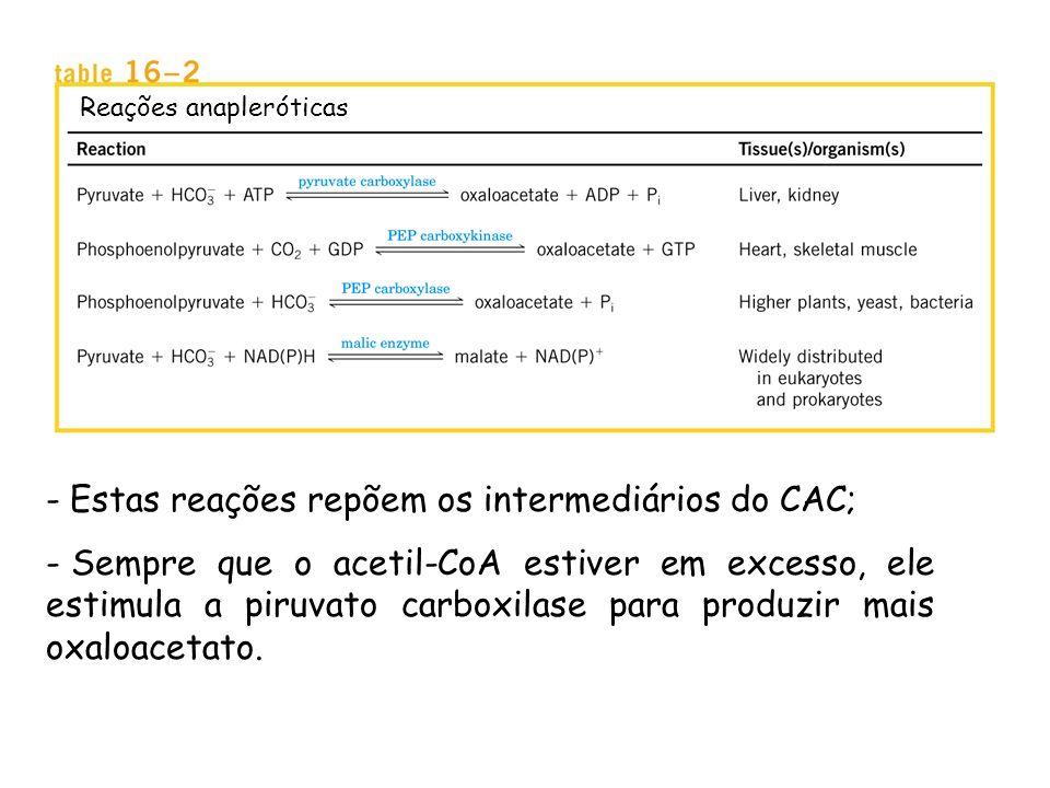 Estas reações repõem os intermediários do CAC;