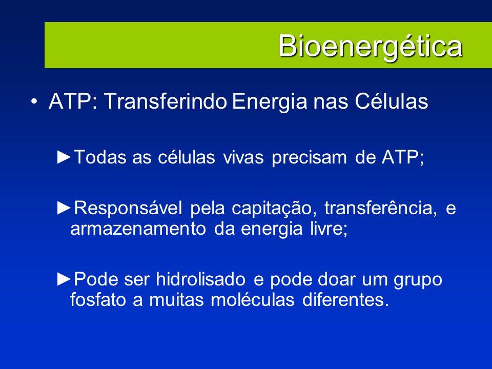 Bioenergética ATP: Transferindo Energia nas Células