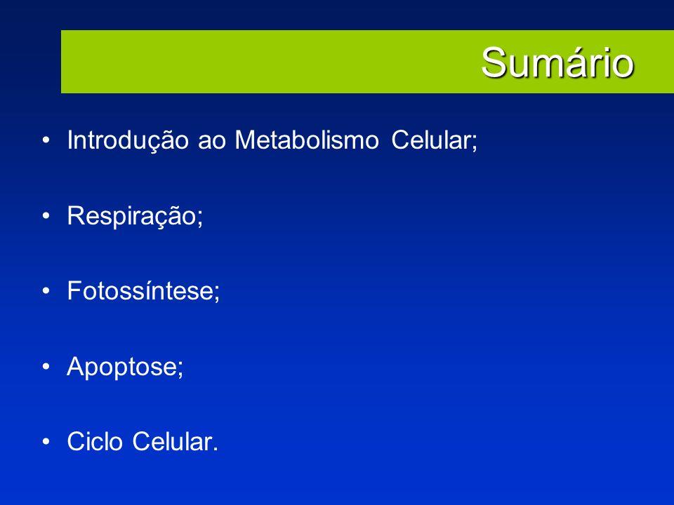 Sumário Introdução ao Metabolismo Celular; Respiração; Fotossíntese;