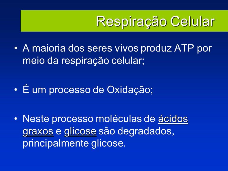 Respiração Celular A maioria dos seres vivos produz ATP por meio da respiração celular; É um processo de Oxidação;