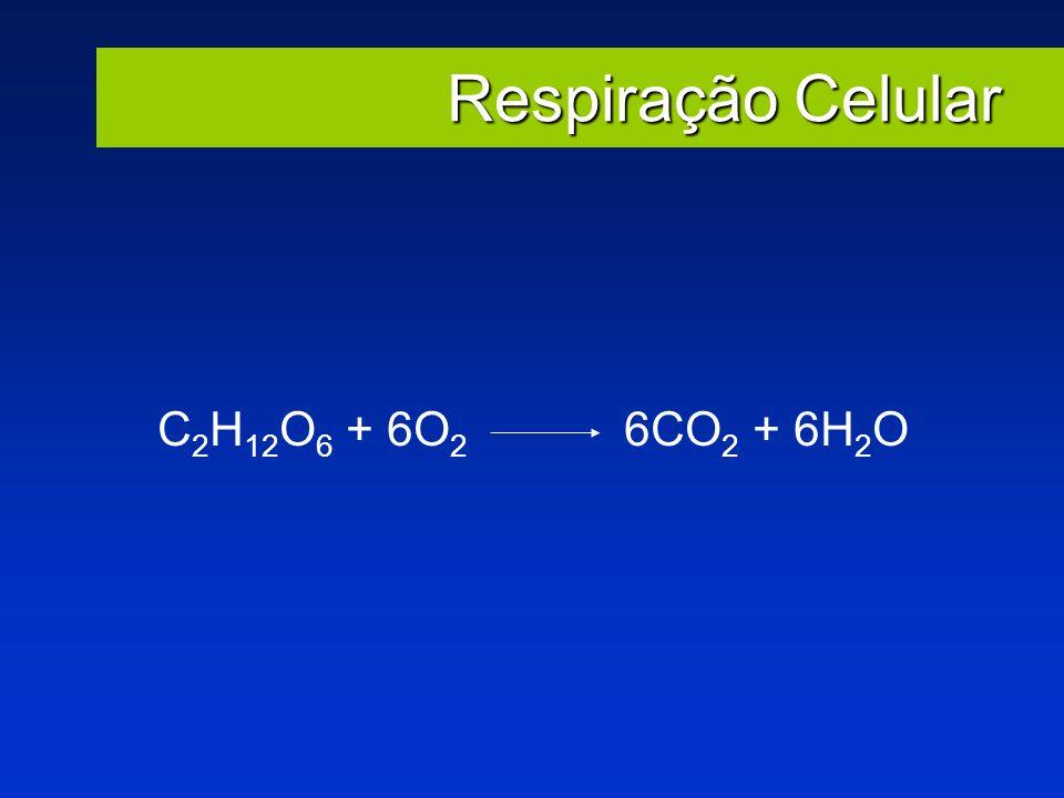 Respiração Celular C2H12O6 + 6O2 6CO2 + 6H2O