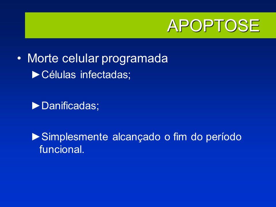 APOPTOSE Morte celular programada Células infectadas; Danificadas;