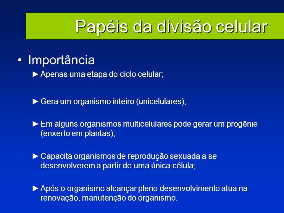 Papéis da divisão celular