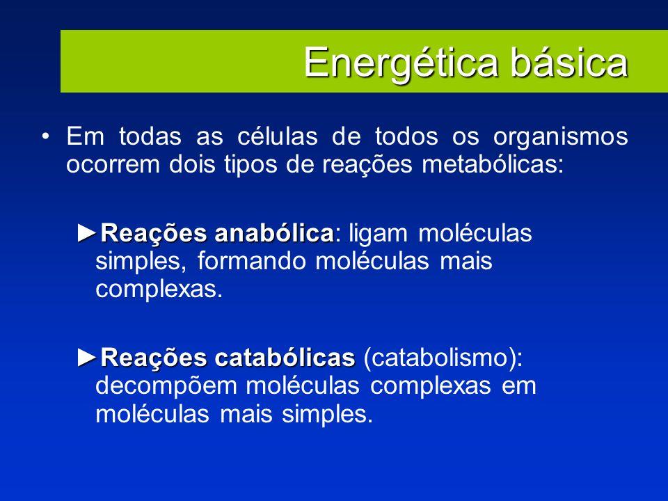 Energética básica Em todas as células de todos os organismos ocorrem dois tipos de reações metabólicas: