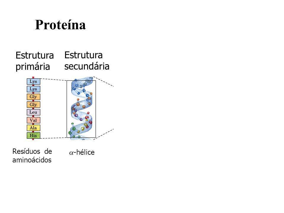 Proteína Estrutura primária Estrutura secundária Estrutura terciária