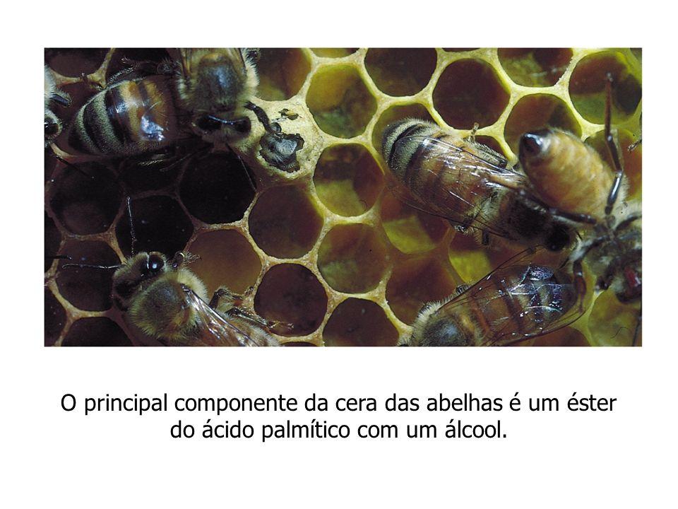 O principal componente da cera das abelhas é um éster do ácido palmítico com um álcool.