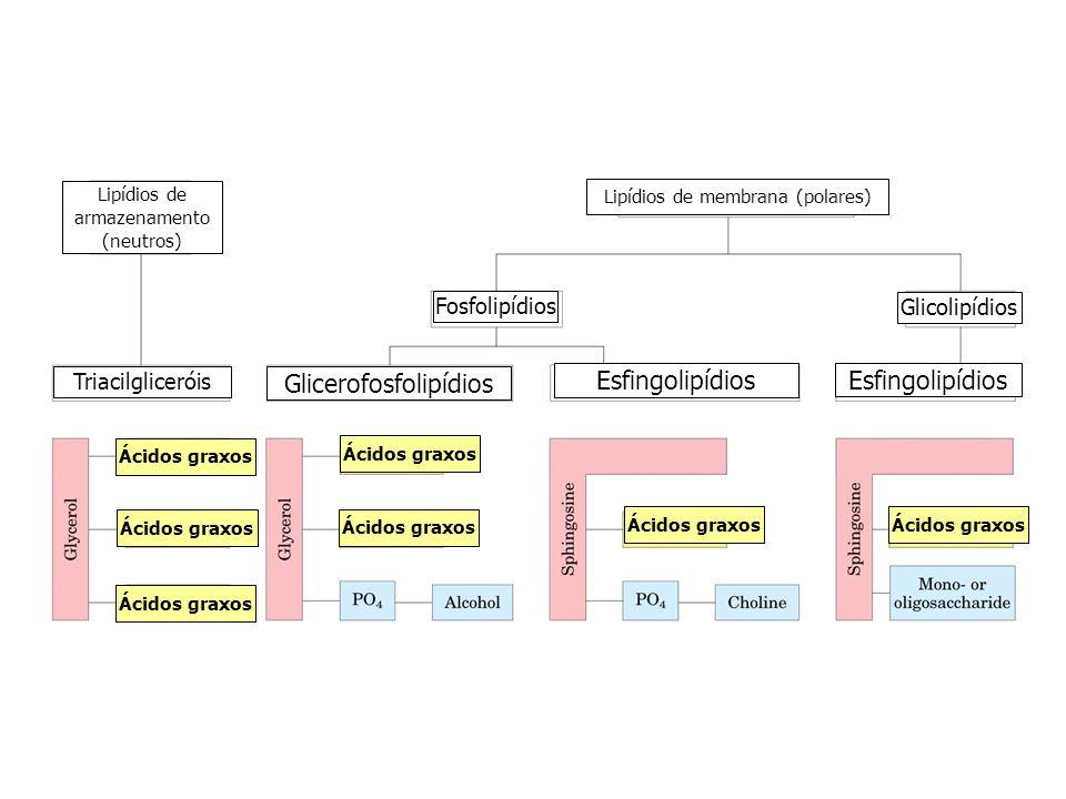 Glicerofosfolipídios Esfingolipídios Esfingolipídios