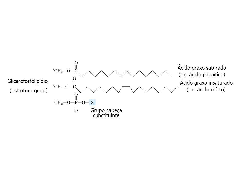 Ácido graxo insaturado (ex. ácido oléico)