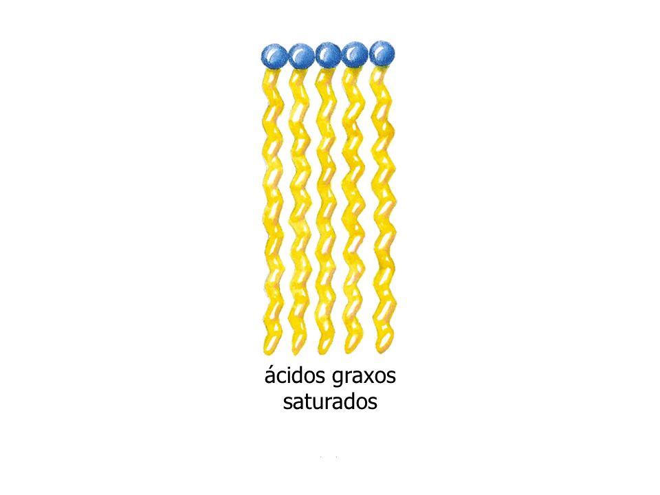 ácidos graxos saturados