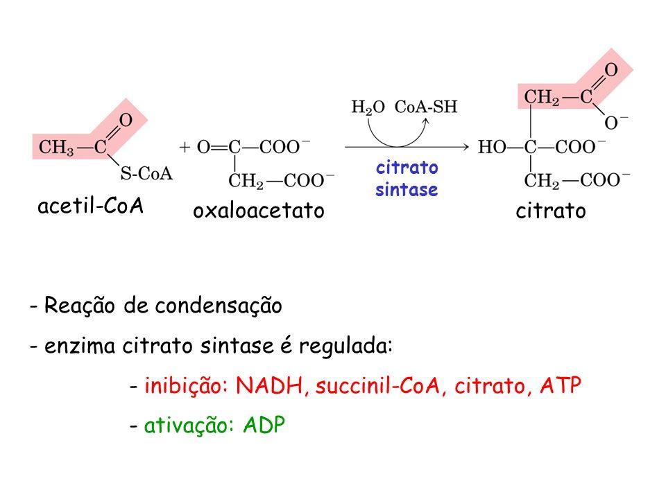 enzima citrato sintase é regulada: