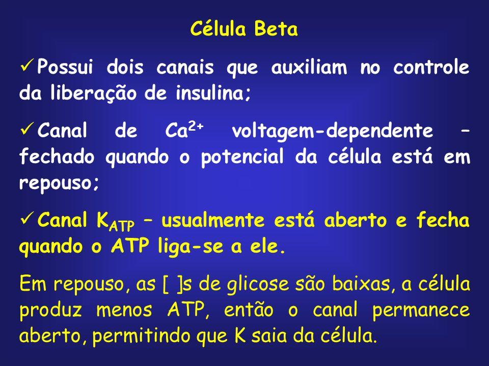 Célula Beta Possui dois canais que auxiliam no controle da liberação de insulina;