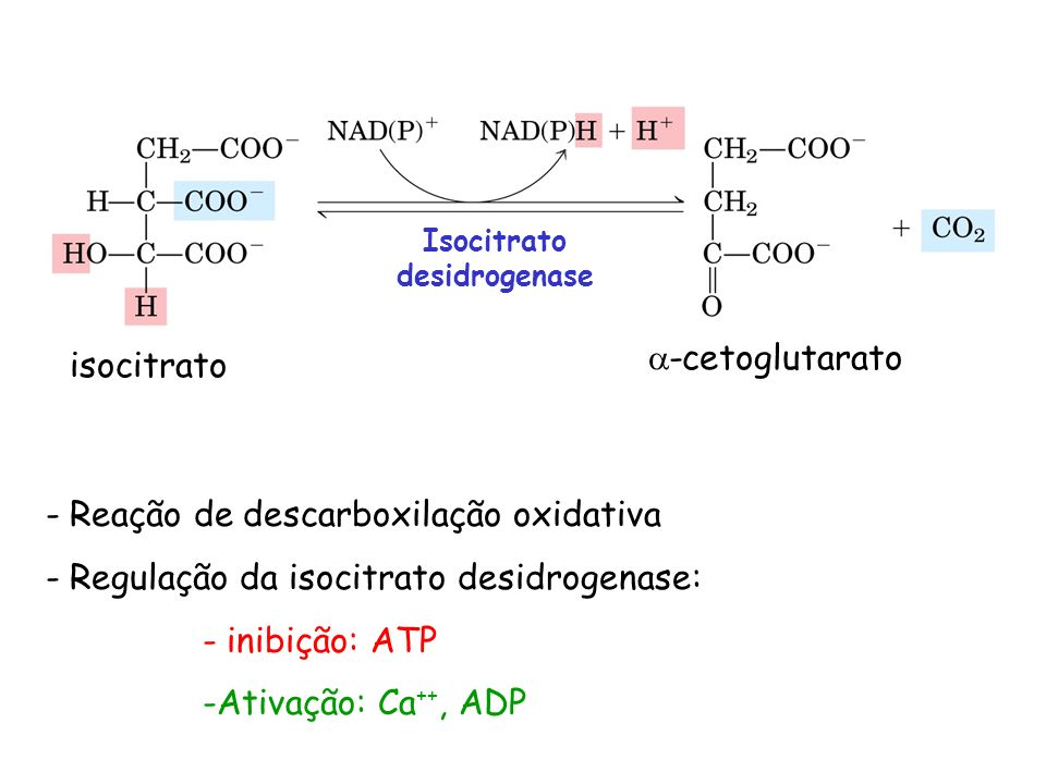 Isocitrato desidrogenase