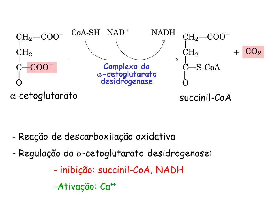 -cetoglutarato desidrogenase