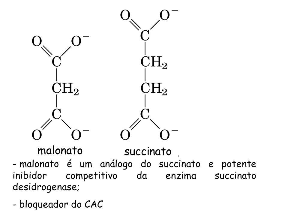 malonato succinato. malonato é um análogo do succinato e potente inibidor competitivo da enzima succinato desidrogenase;