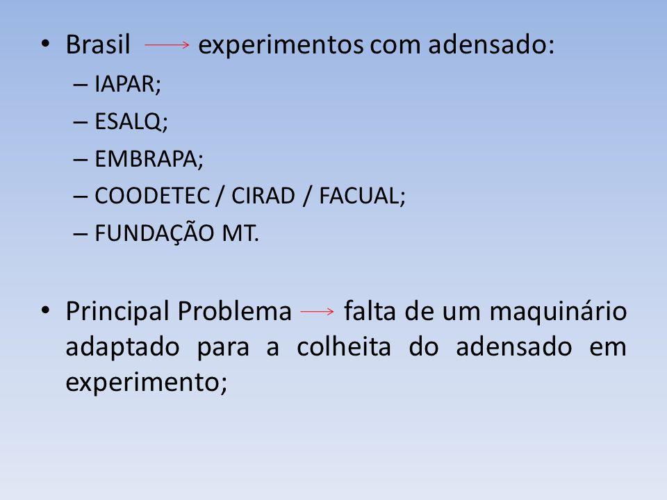 Brasil experimentos com adensado: