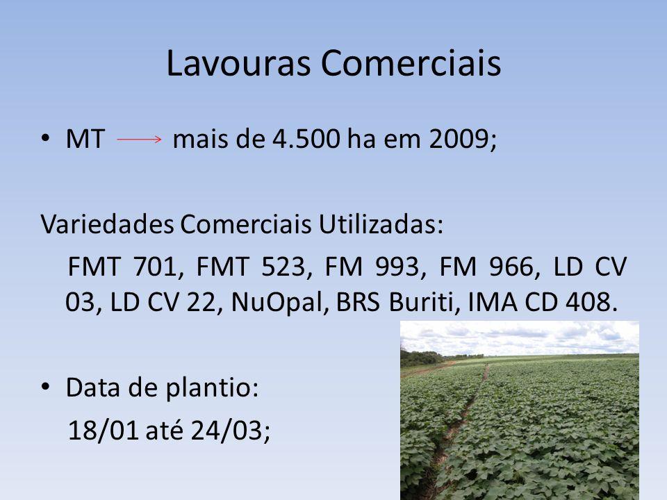 Lavouras Comerciais MT mais de 4.500 ha em 2009;