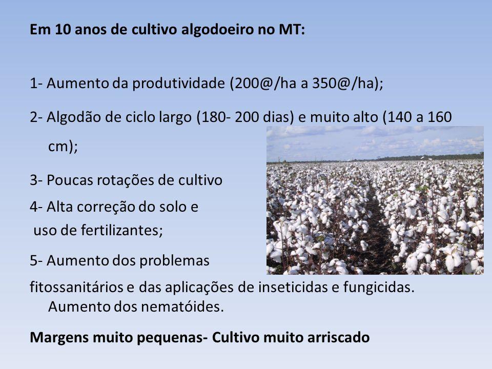 Em 10 anos de cultivo algodoeiro no MT: