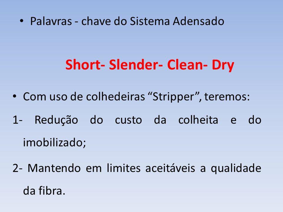 Short- Slender- Clean- Dry