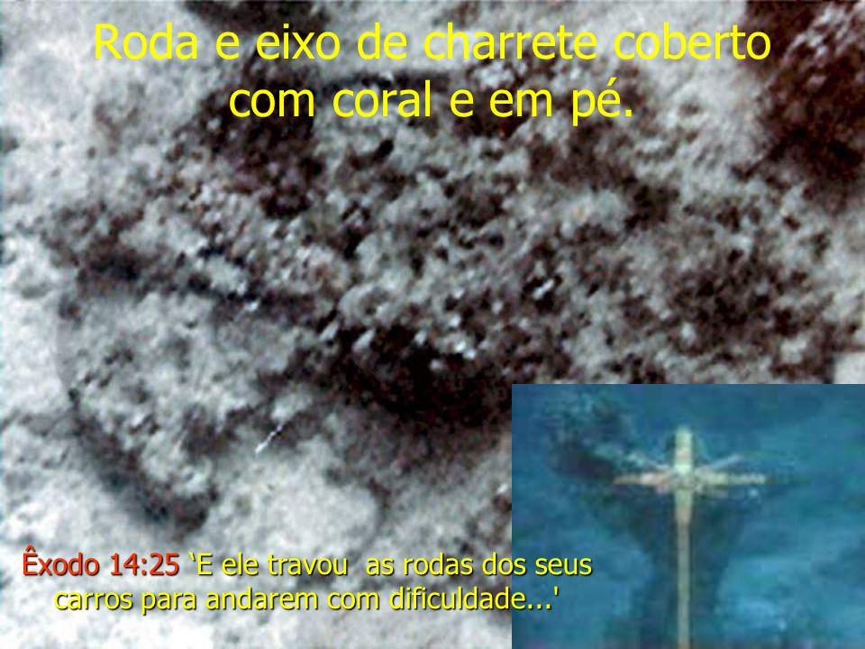 Roda e eixo de charrete coberto com coral e em pé.