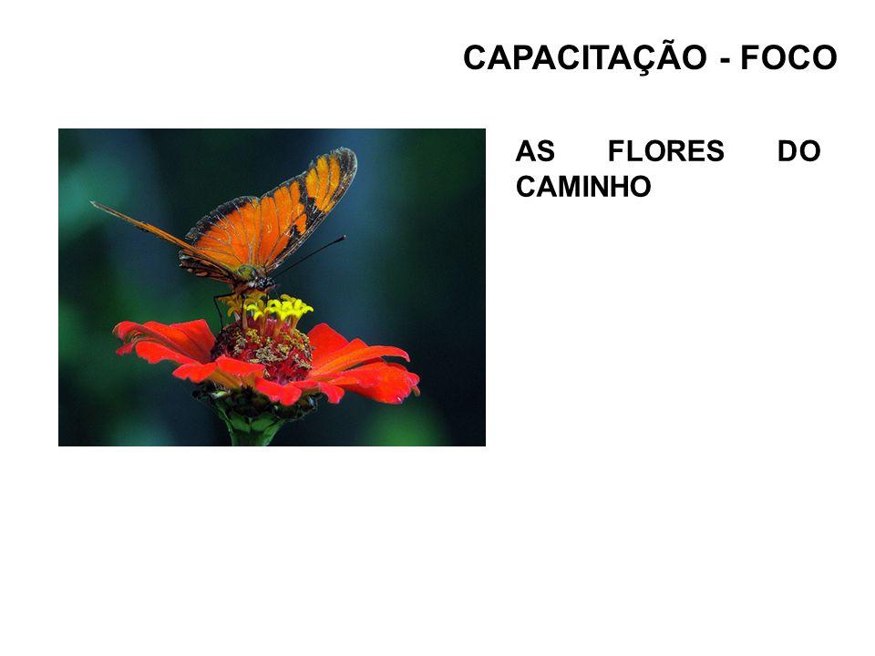 CAPACITAÇÃO - FOCO AS FLORES DO CAMINHO