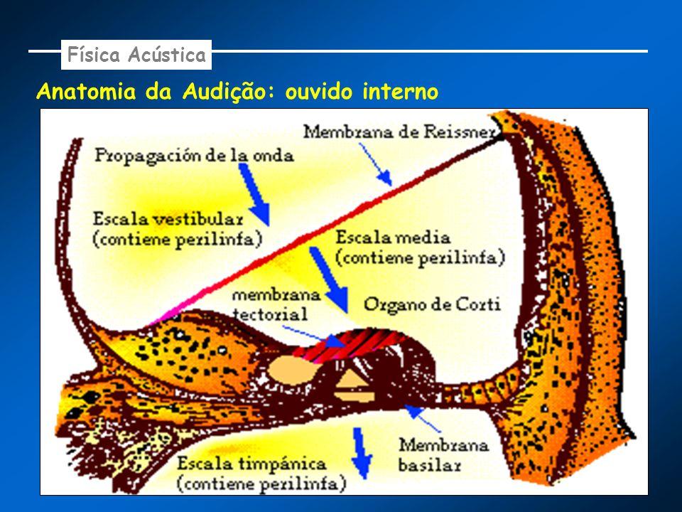 Anatomia da Audição: ouvido interno