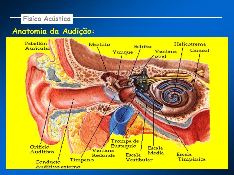 Física Acústica Anatomia da Audição: